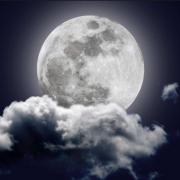 Portrait de MoonWight